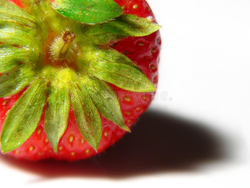 Juicy Strawberry Macro Free Stock Photo