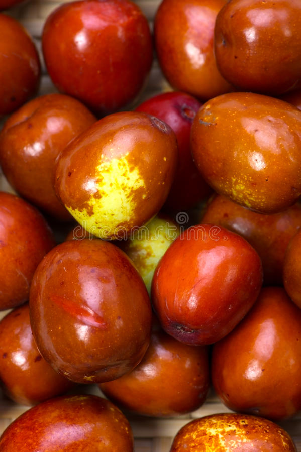 Download Jujube stock photo. Image of fruit, plant, chinese, fruitage - 27372422