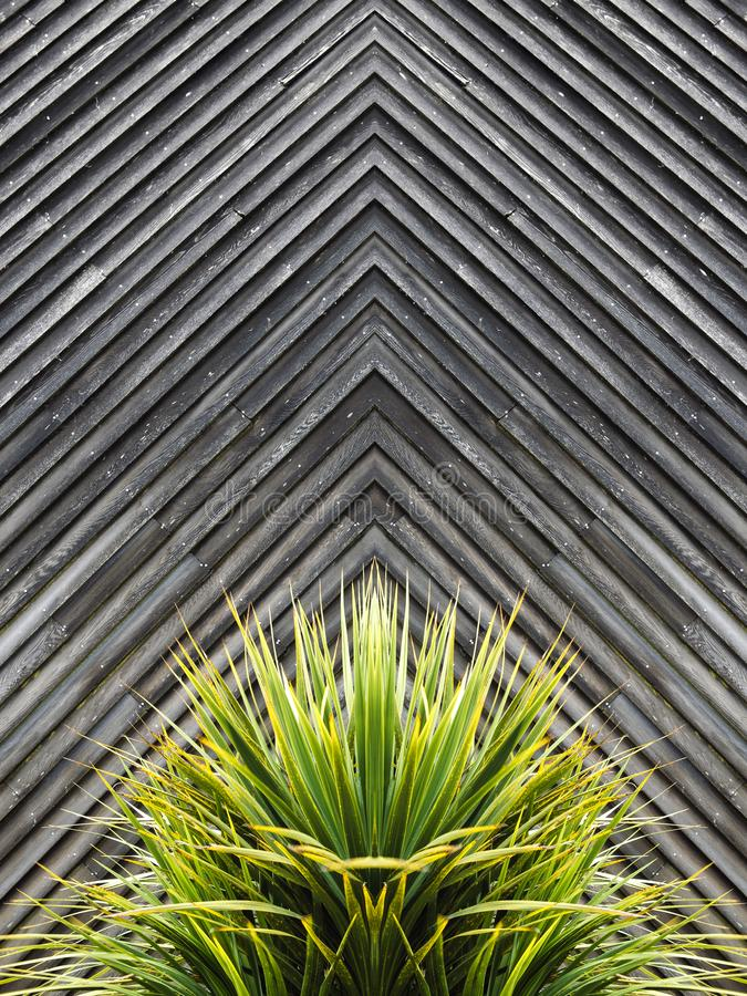 Jukka lub kaktusowy roślina abstrakt z diagonalnymi deskami drewno w t obraz royalty free