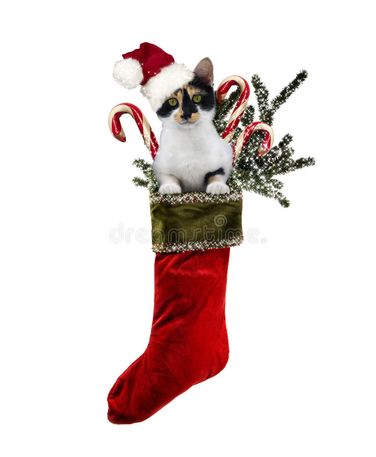 Jul Cat Stocking royaltyfri foto
