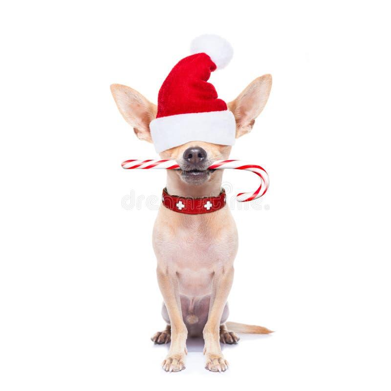Jul dog som Santa Claus royaltyfria foton