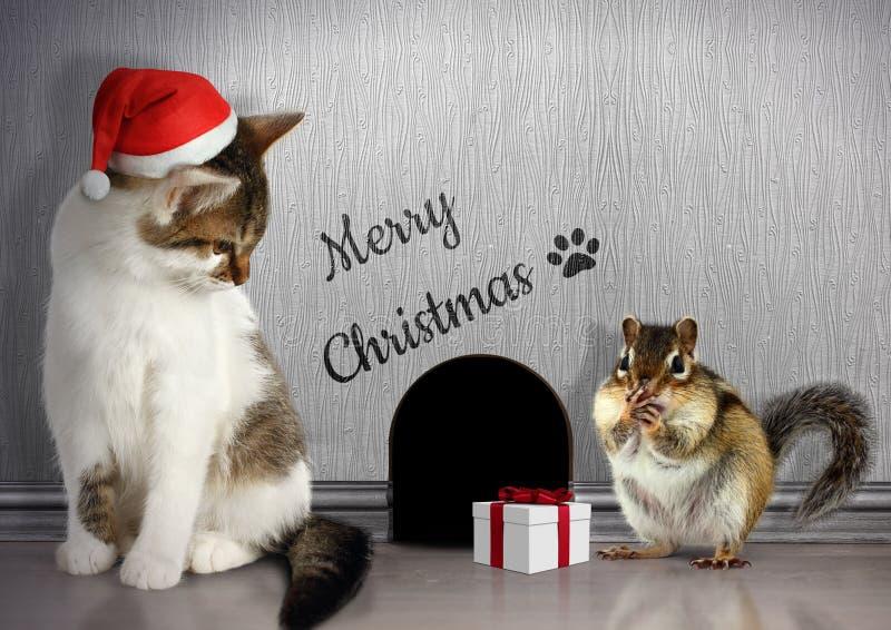 Jul gratulerar begrepp, den roliga katten med den santa hatten och gif royaltyfria bilder