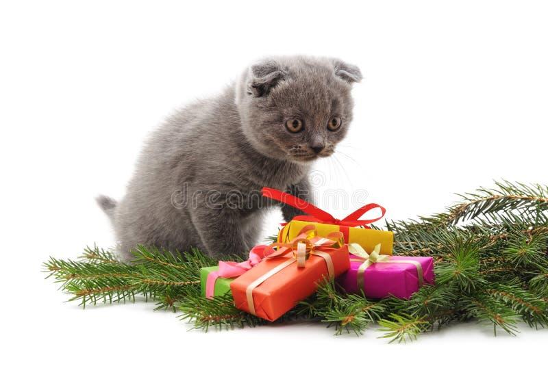Jul katt och gåvor royaltyfria foton