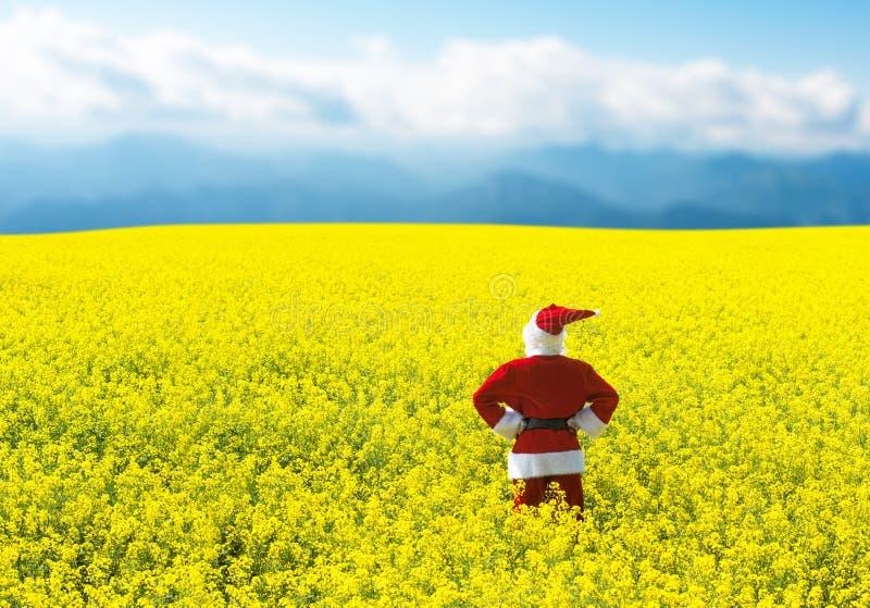 Jul Santa Claus, i att blomma det gula fältet arkivbild