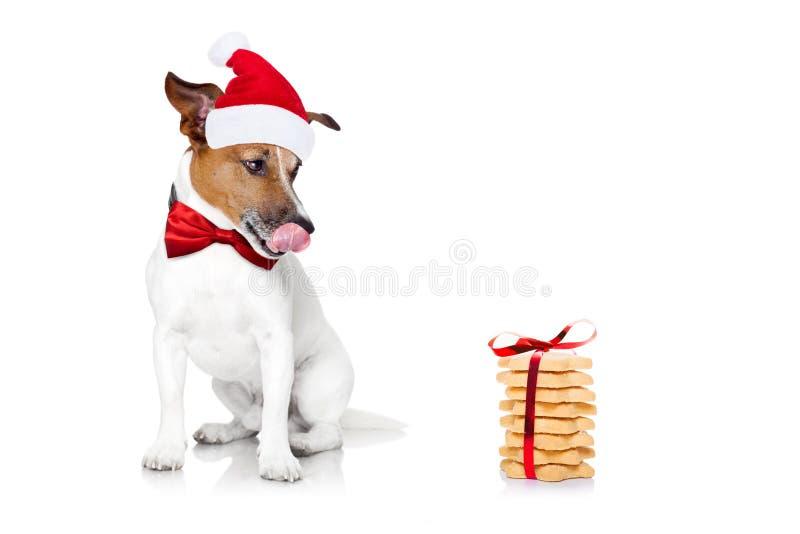 Jul Santa Dog royaltyfri fotografi