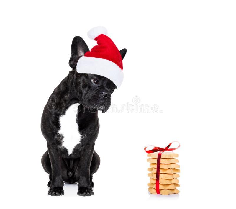 Jul Santa Dog arkivfoto