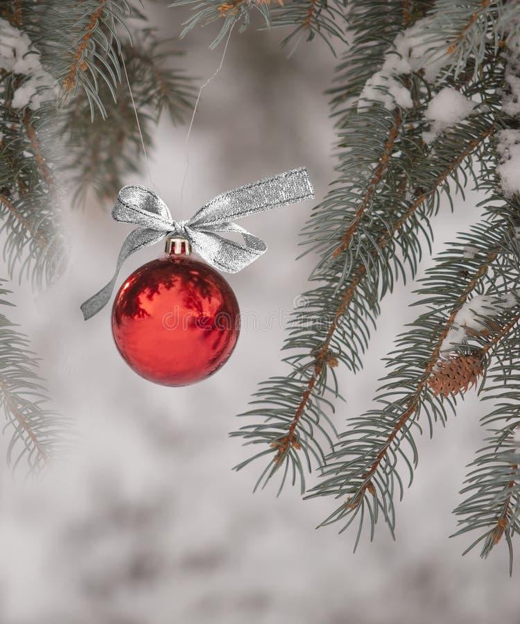 Jul smyckar att hänga från träd utomhus royaltyfri bild