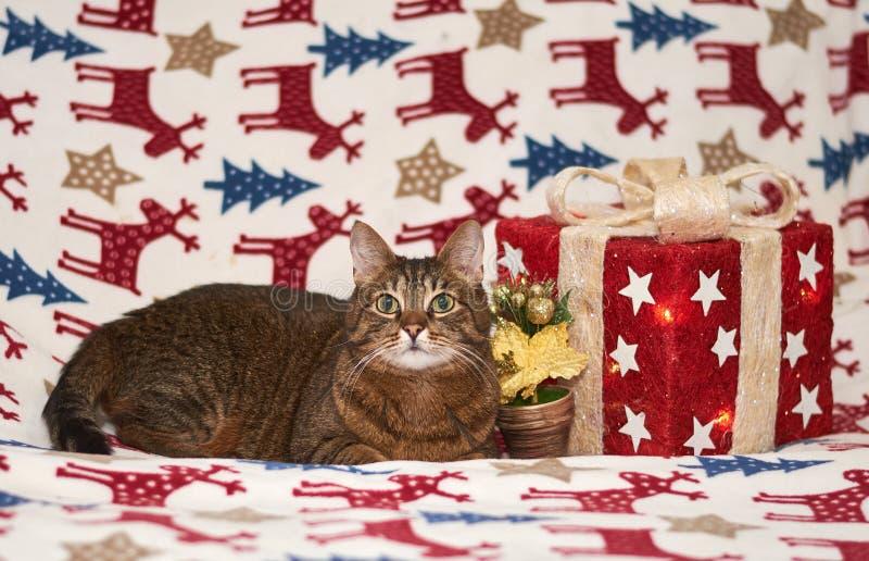 Jul tajmar med den inhemska katten arkivfoton