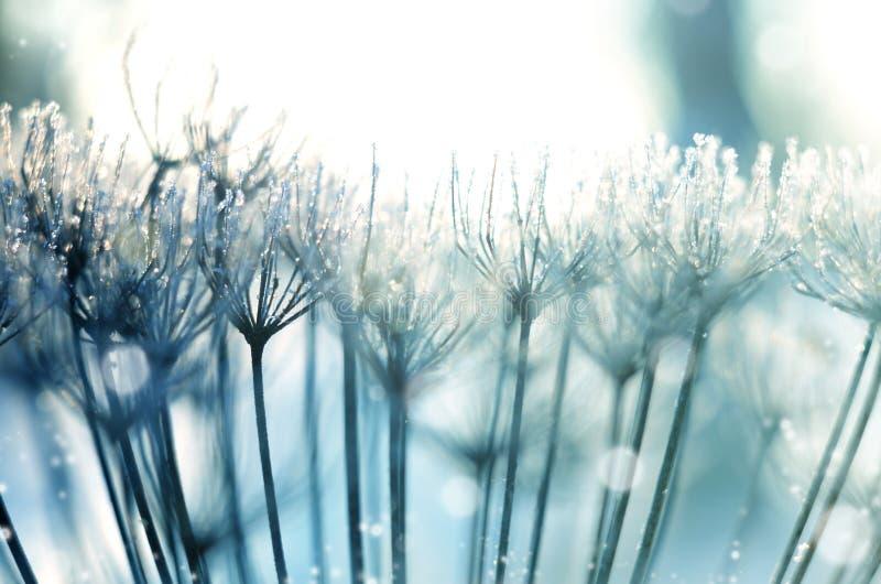 Jul vinterbakgrund med frostigt torkar växter mot mousserande bokeh royaltyfria foton