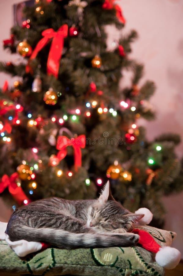 Julande fotografering för bildbyråer