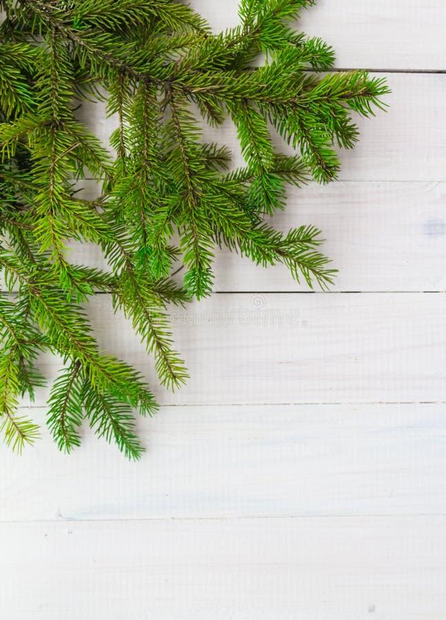 Julbakgrund gör grön prydlig trärisvit royaltyfri foto