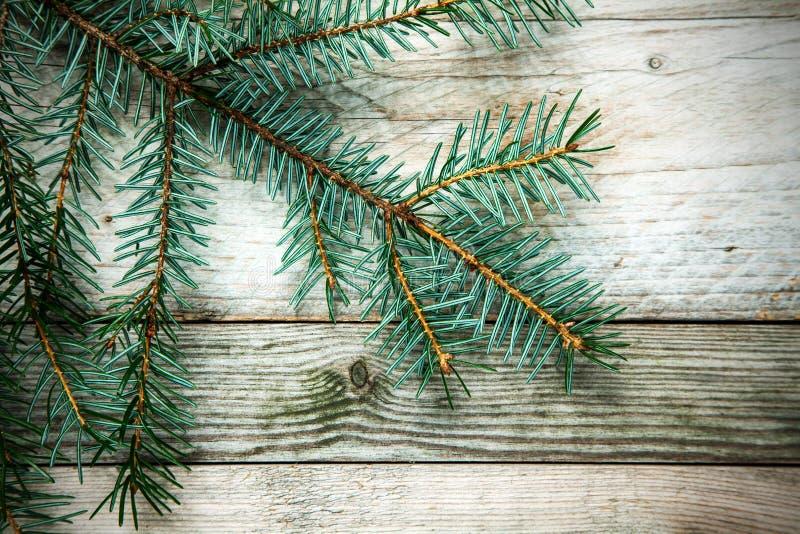Julbakgrund med ett naturligt sörjer filialen royaltyfri bild