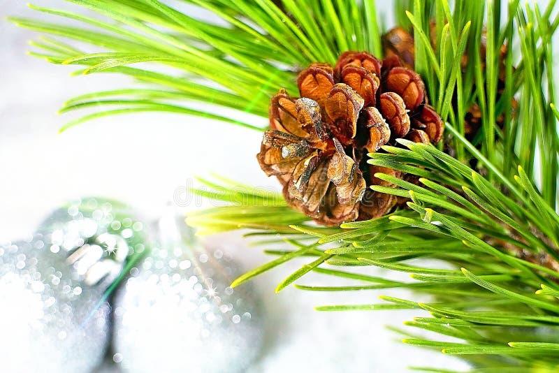 Julbakgrund med sörjer kotten och ljusa effekter royaltyfri fotografi