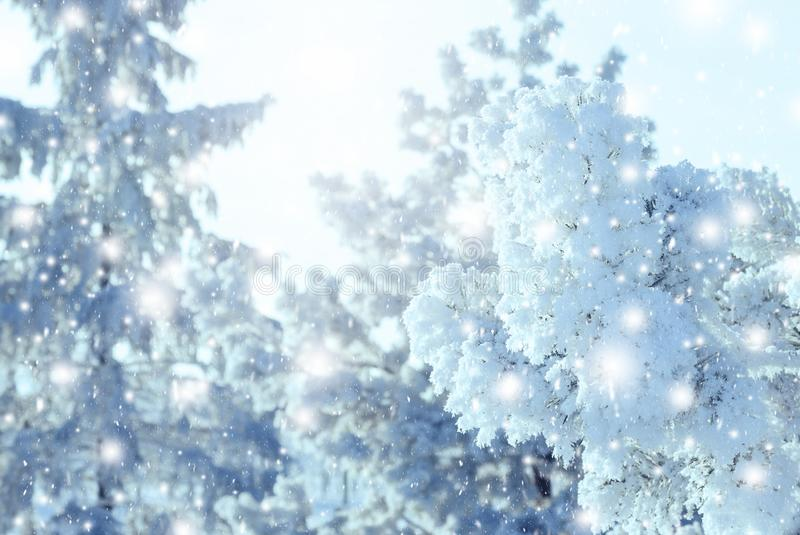 Julbakgrund med snöig granträd fotografering för bildbyråer