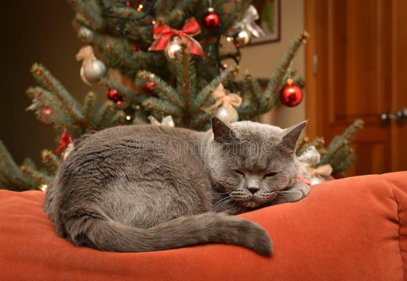 Juldrömmar royaltyfri fotografi
