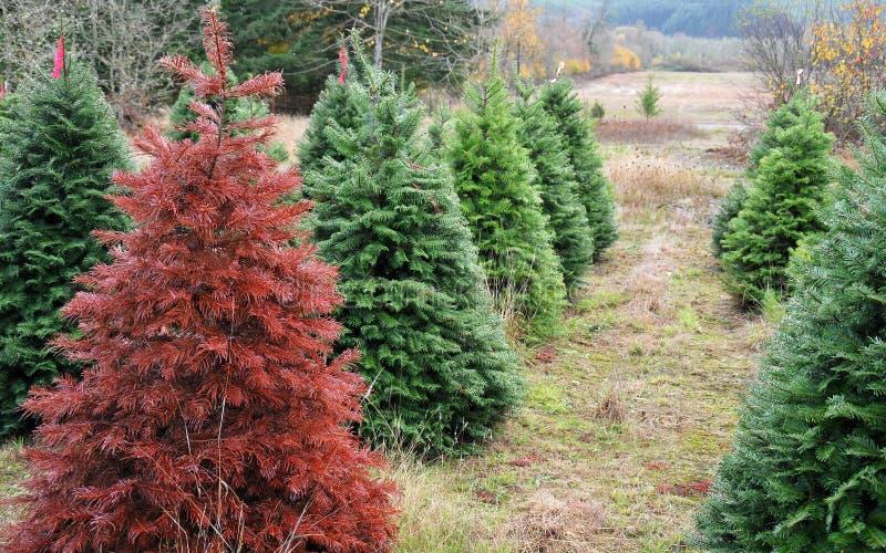 julen tränger ihop ut den röda plattform treen arkivfoton