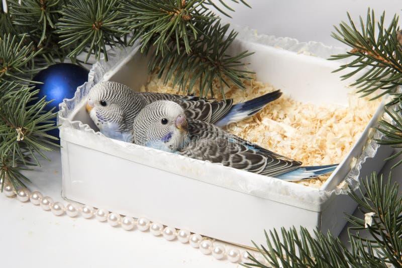 Julgåva, liten fågel två arkivfoto