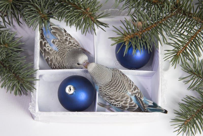 Julgåva, liten fågel två royaltyfri foto