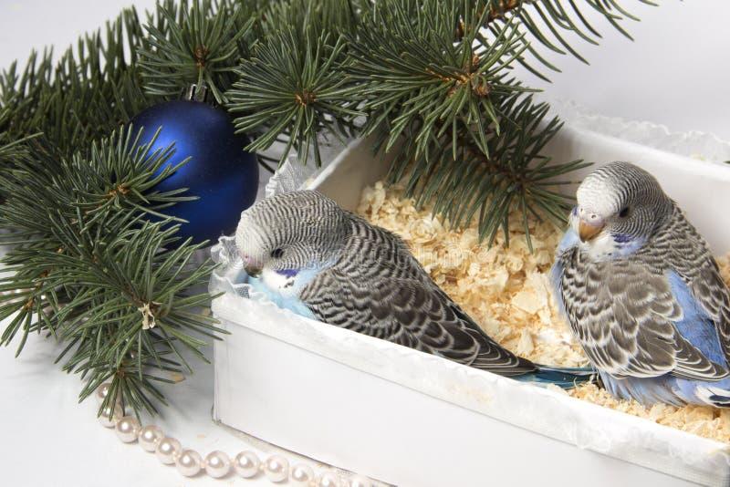 Julgåva, liten fågel två arkivfoton