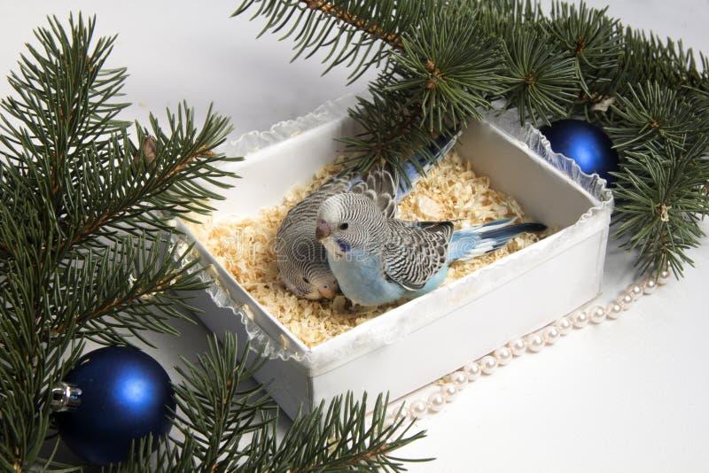 Julgåva, liten fågel två royaltyfria foton