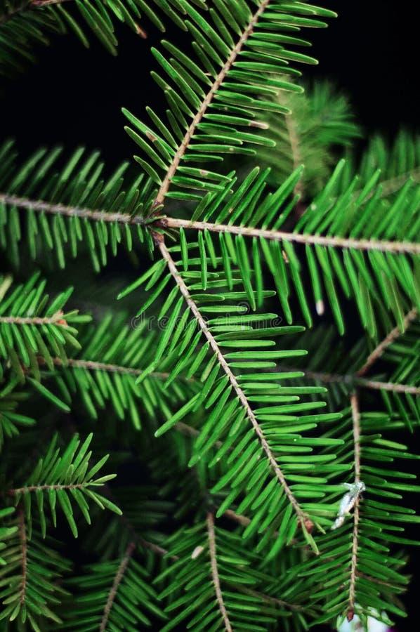 Julgarnering, gräsplan sörjer filialer på svart bakgrund grön spruce för filial Gräsplan sörjer, det nya året 2016, jul, sörjer k royaltyfri fotografi