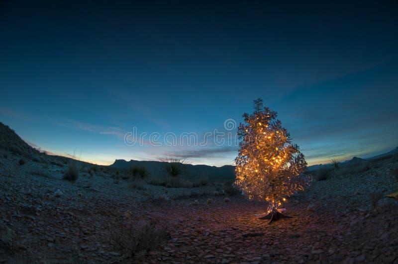 Julgran i öknen fotografering för bildbyråer