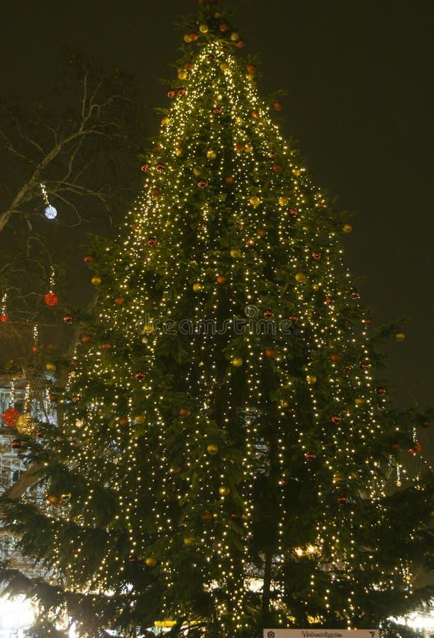 Julgran - julmarknad royaltyfria bilder