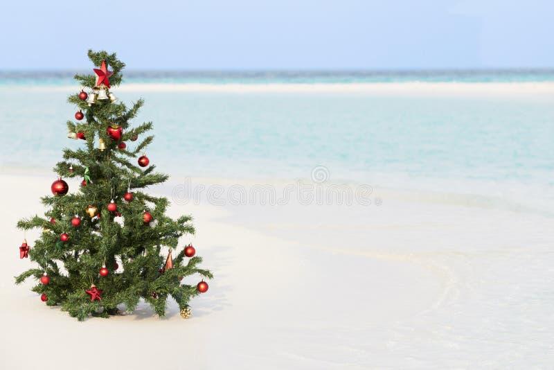 Julgran på den härliga tropiska stranden royaltyfri fotografi