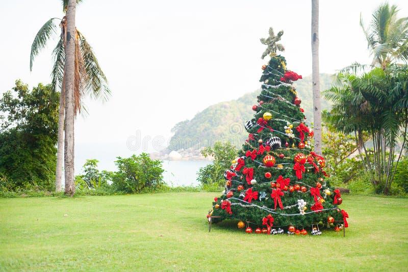 Julgran på härlig tropisk bakgrund royaltyfri foto