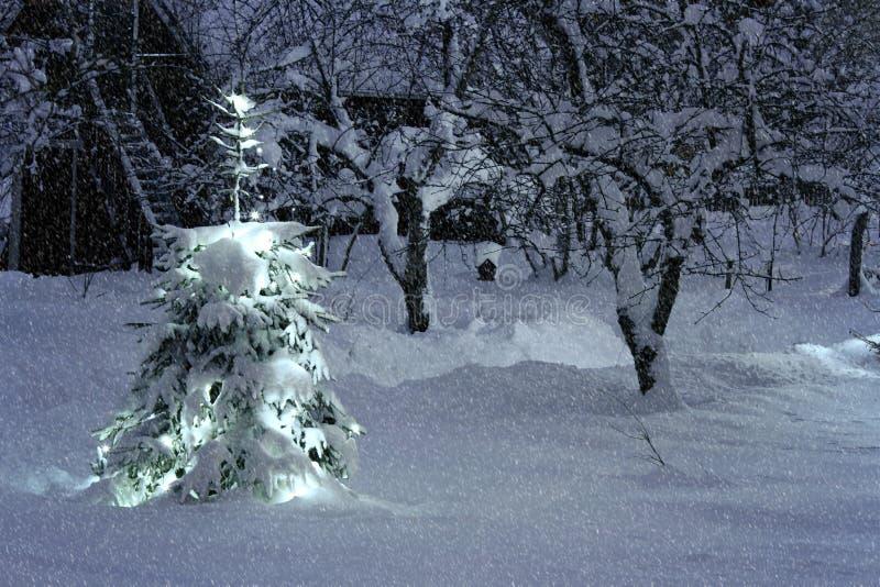 Julgran utanför i snöig trädgård arkivfoton