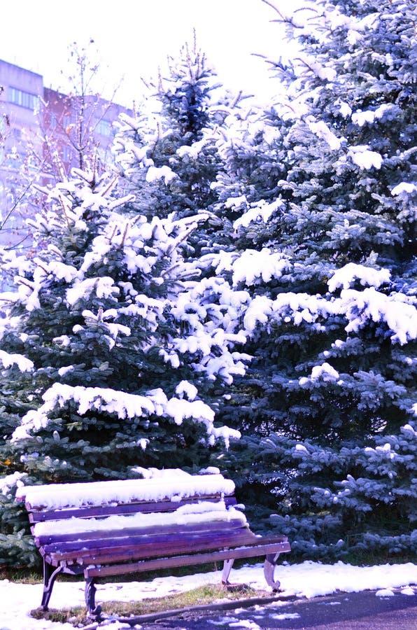 Julgranar i snön och en bänk royaltyfri fotografi