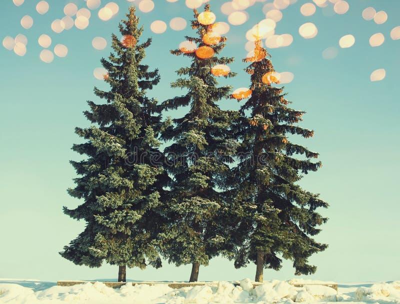 Julgranar med guld- bokeh i vinter, tappningfärgfoto royaltyfri bild