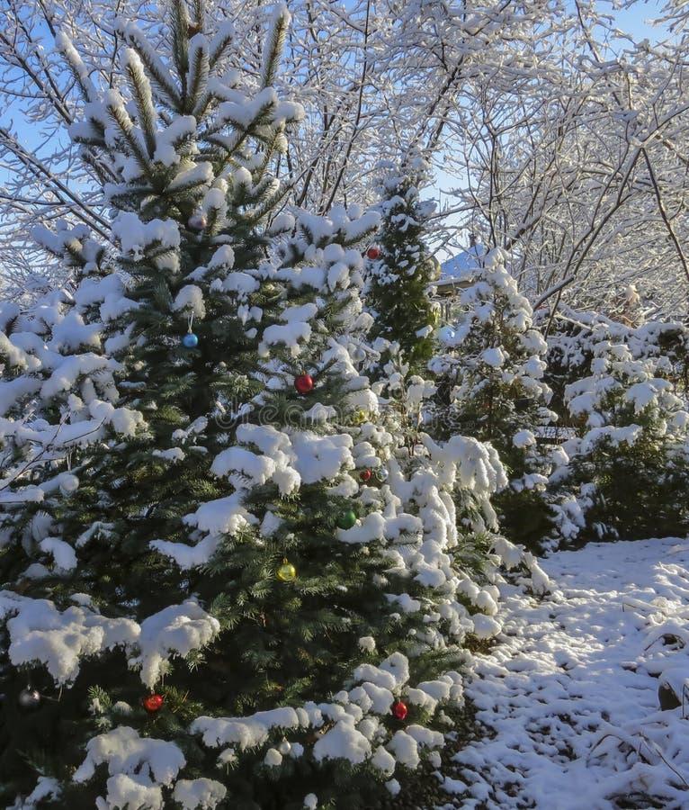 Julgranen i trädgården dekoreras med julpynt, dess filialer och visare royaltyfri foto