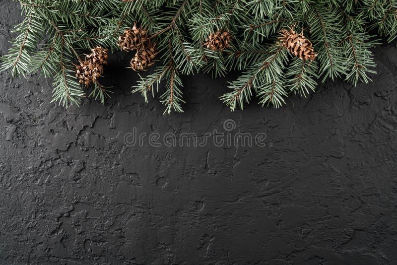 Julgranfilialer med sörjer kottar på mörk svart bakgrund Kort för Xmas och för lyckligt nytt år, bokeh, gristra som glöder royaltyfri fotografi