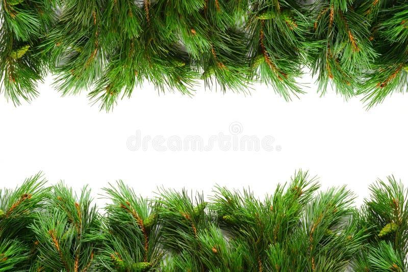 Julgrangräns royaltyfria bilder