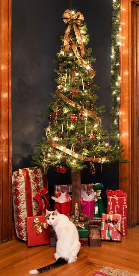Julgranhörn med gåvor och katten royaltyfri bild