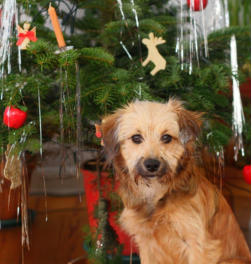 Julhund royaltyfria bilder