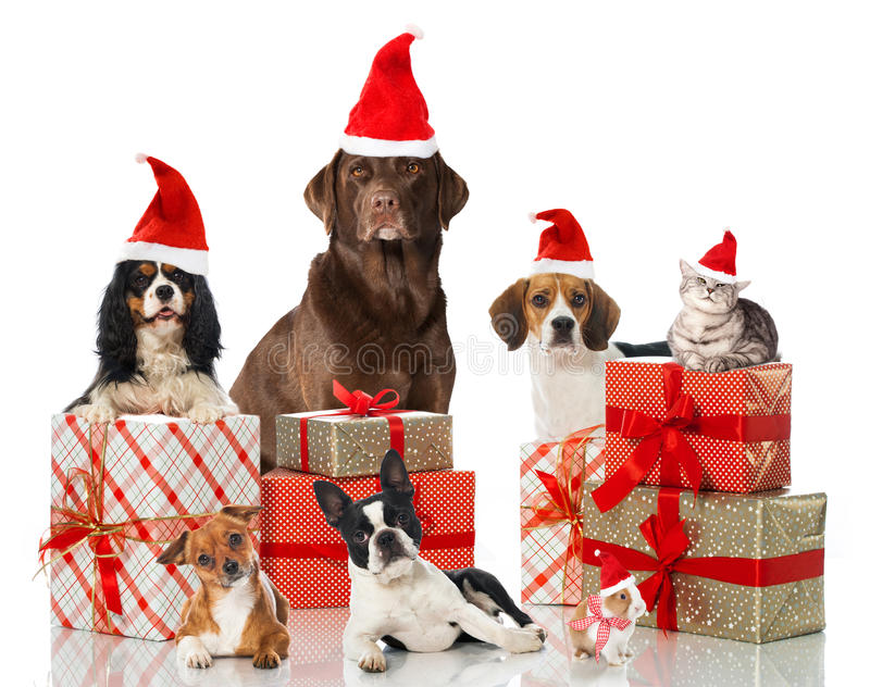 Julhusdjur royaltyfria bilder