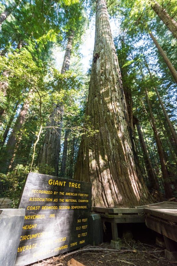 Juli 10 2018 - Klamath, CA: Tecken för det jätte- trädet i redwoodträdnationalpark som ger dess statistik arkivfoto