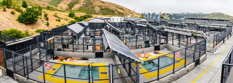 4 juli, 2019 Sausalito/CA/de V.S. - Marine Mammal Center in Marin Headlands in baai die de Noord- van San Francisco wordt gevesti royalty-vrije stock foto's