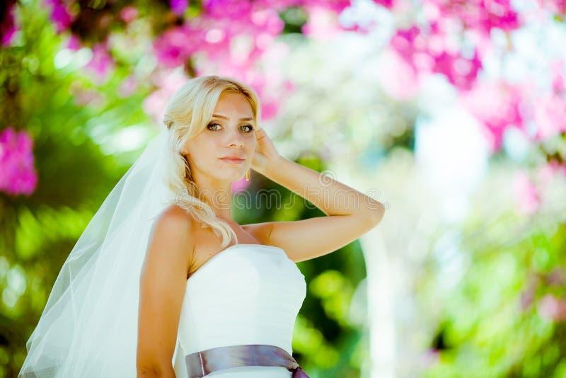 Julia royalty free stock photos