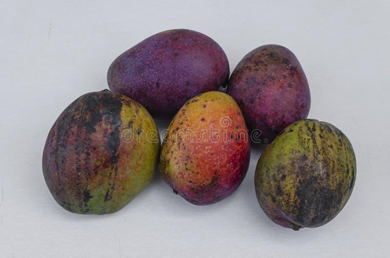 Julie I Irwin Cali Dojrzali mango obraz royalty free