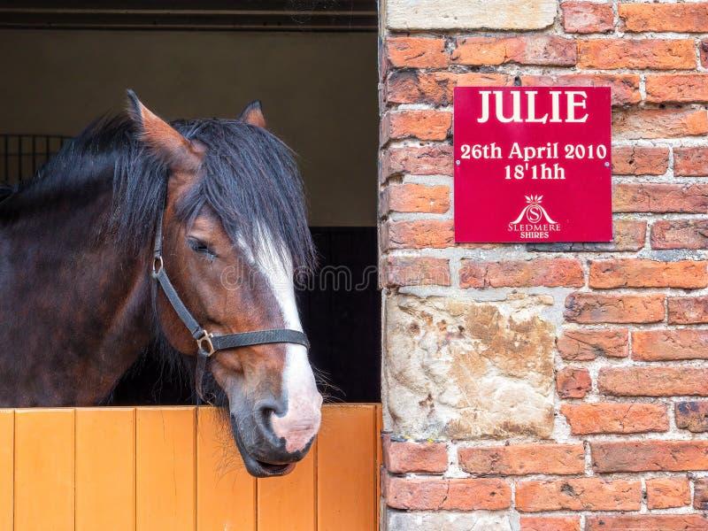 Shire Horse, Sledmere House, Yorkshire, England. royalty free stock image