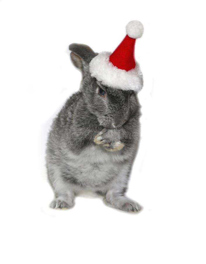 Julkanin i hatten av Santa Claus royaltyfria foton