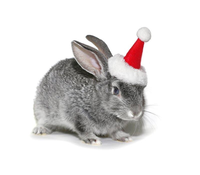 Julkanin i hatten av Santa Claus arkivfoton