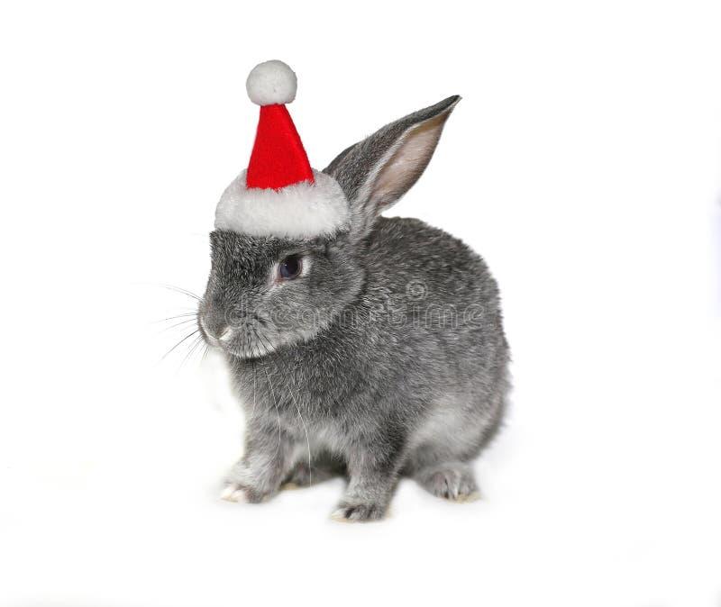 Julkanin i hatten av Santa Claus arkivfoto