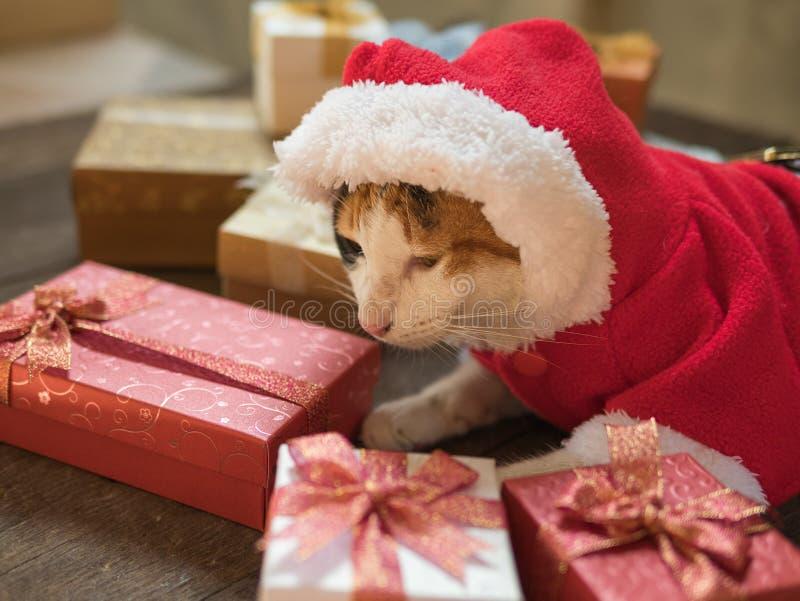 Julkatt i den Santa Claus dräkten på bakgrund för gåvaask arkivfoto