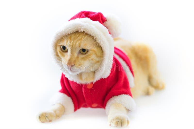 Julkatt i det santa följet på vit bakgrund fotografering för bildbyråer