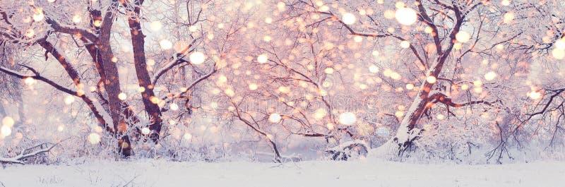 Julmorgon i Central Park Snöig vinterbakgrund arkivfoton