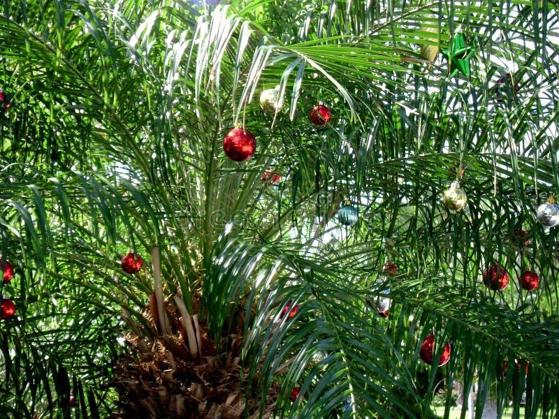 Julpalmträdet dekorerade med skinande röda prydnader i de Florida tangenterna royaltyfria bilder